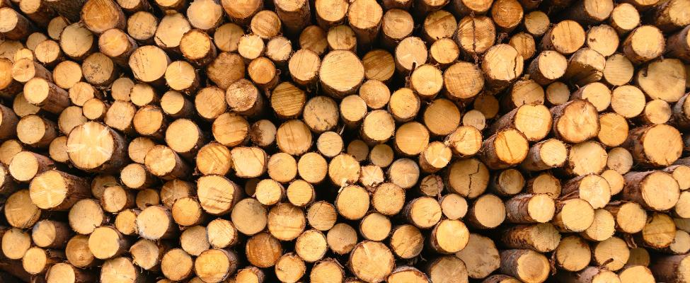 European Union Timber Regulation EUTR