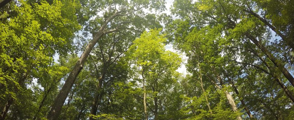 FSC<sup>®</sup> Forest Management Certification